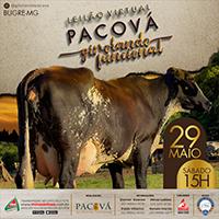 Leilão Virtual Girolando Pacová acontece em 29 de maio
